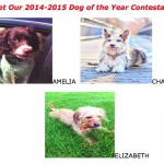Ocean City's Dog of the Year To Be Named on Saturday