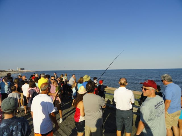 More than 1 000 tour 14th street fishing pier ocnj daily for Surf city pier fishing report