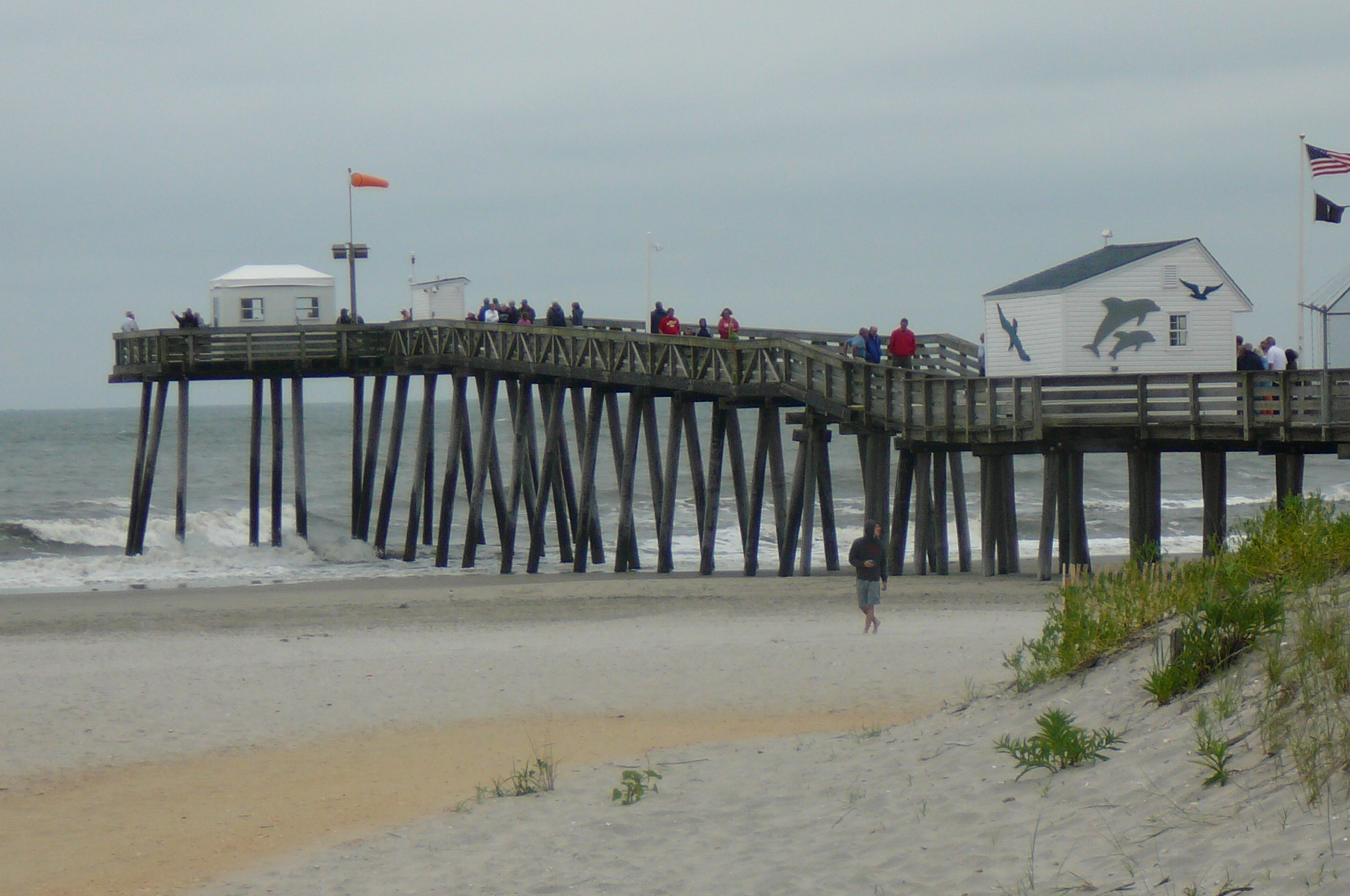 No pier pressure ocnj daily for Surf city pier fishing report