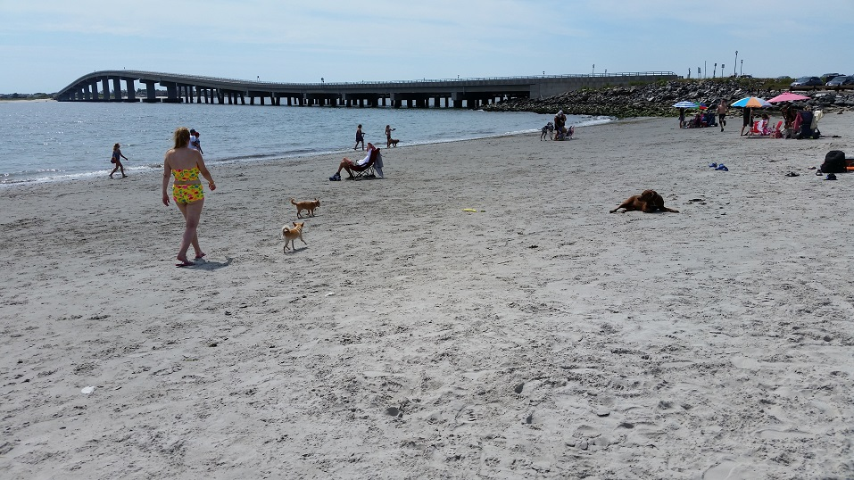 Ocean city considers a new trick to attract tourists for Ocean city nj surf fishing report