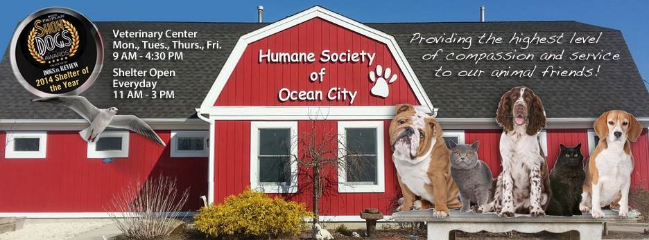 human-society-of-ocean-city-4