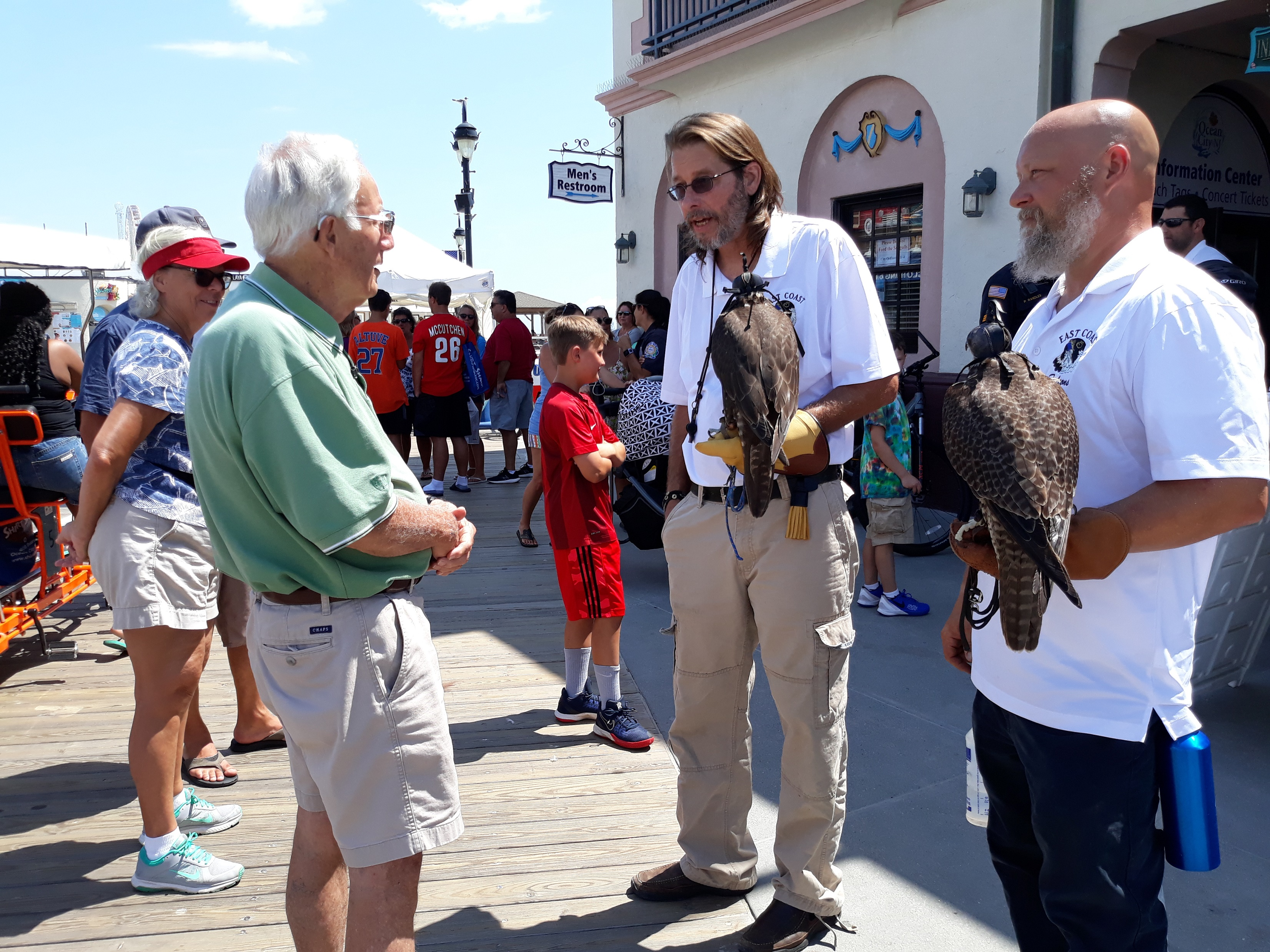 Falcons Arrive to Chase Away Pesky Seagulls | OCNJ Daily